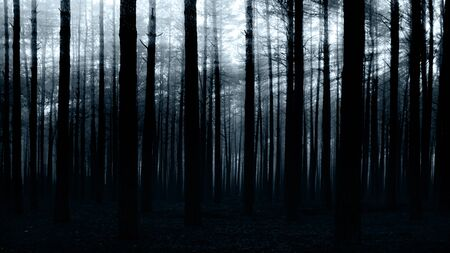 scared man: sunset in the dark forest for you design Stock Photo