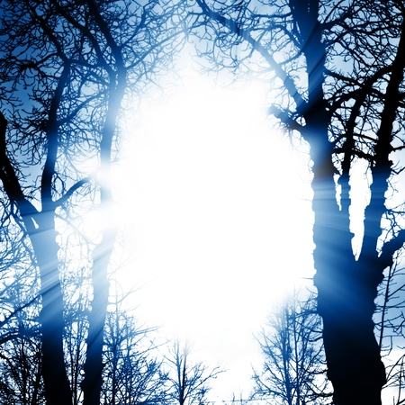 Dark magic trees. A bright flash of light Stock Photo - 8498674