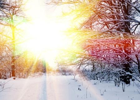 snowbound: snowbound winter forest in a rays of evening sun