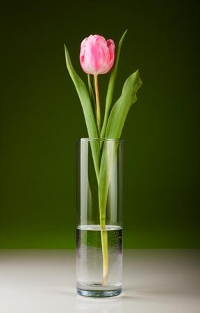 vase: beautiful fresh pink tulip for your design