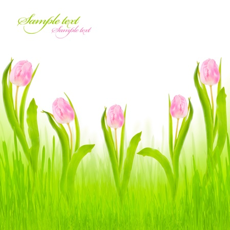 frame with pink tulips for your design Stock Photo - 8951960