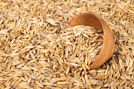 Crop of oats, the background for your design photo