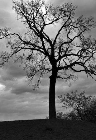 dry grass: mysterious dark lonely tree against the background of the cloudy sky Stock Photo