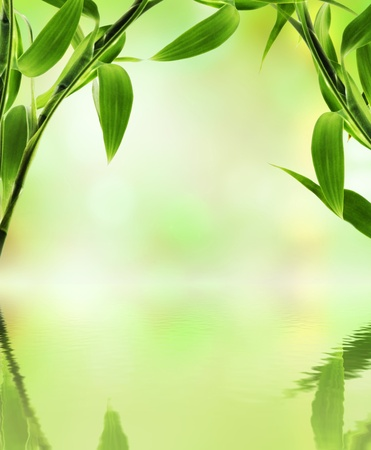 Green bamboo over abstract blurred background