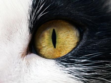 portrait of yellow-eyed cat Stock Photo - 9834488