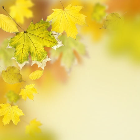 autumn leaves, very shallow focus Stock Photo - 10048776