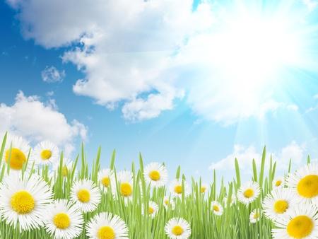 Little daisies in grass against a blue sky  免版税图像