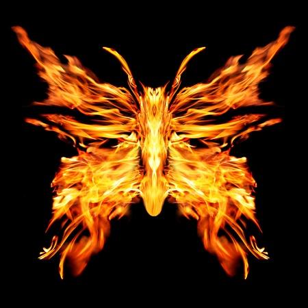 黒い背景に燃えるような蝶