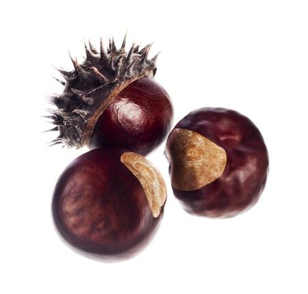 marron: chestnut on a white background Stock Photo