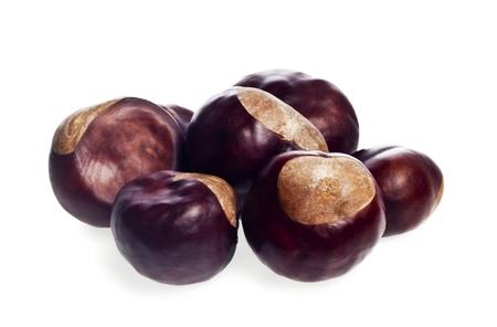 chestnut on a white background photo