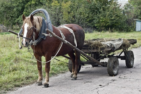 horse drawn: Drawn by a horse in the countryside