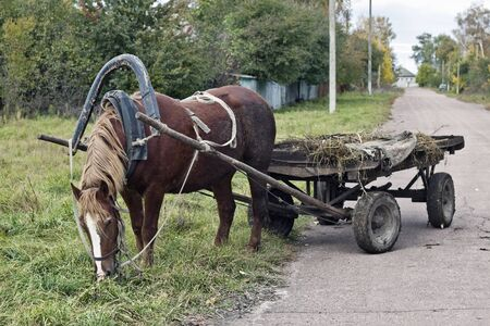 horse cart: Drawn by a horse in the countryside