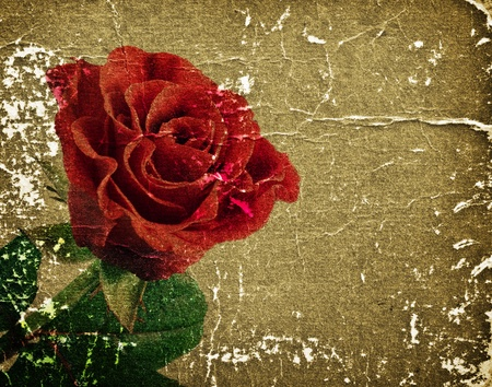 pics: beautiful red rose on a retro background for your design