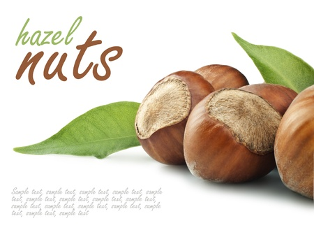 filbert nut: Nuts filberts on white background