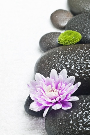 Spa stones with flowers on a white background photo