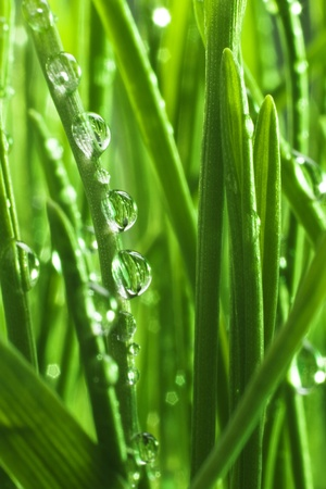 Morning dew on green grass Stock Photo - 12364005