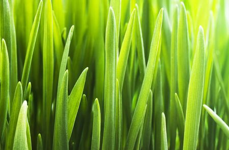 The background of fresh green grass Stock Photo - 12364017