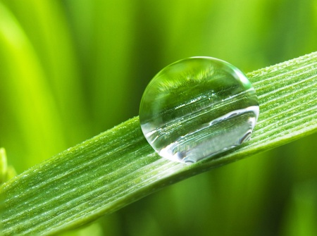 Morning dew on a spring green grass photo