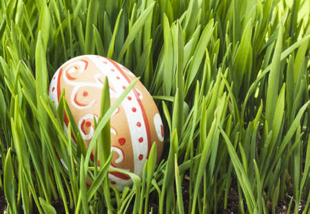 Easter egg in Fresh Green Grass  photo