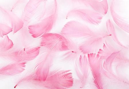 在白色背景上微妙的粉紅色羽毛
