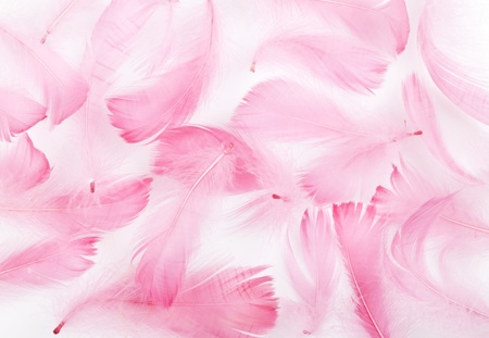 delicate pink feathers on a white background Stock Photo