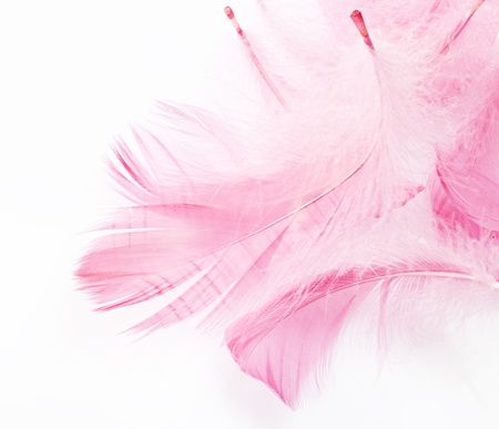 delicate pink feathers on a white background Stock Photo - 12692561