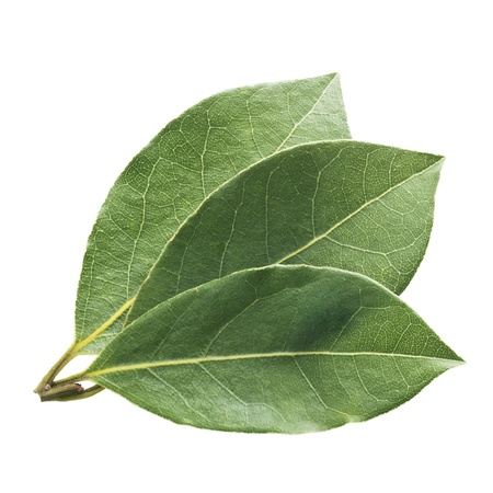 Fresh and green bay leaf on a white background  photo