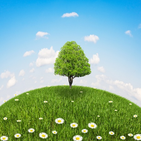 standing on a tree on the mound with grass and daisies