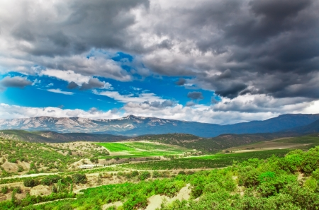 Crimean mountains and vineyards in the summer photo