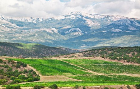 Crimean mountains and vineyards in the summer Stock Photo - 13748494