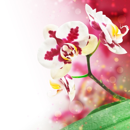 frame for the design of an orchid flower photo