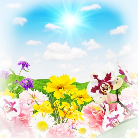 Beautiful flowers on a background of grass and sky photo