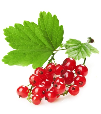 red currant with a leaf on a white background photo