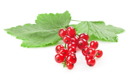 gooseberry bush: red currant with a leaf on a white background