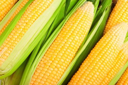 espiga de trigo: mazorca de ma�z entre las hojas verdes