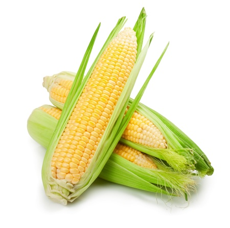 mazorca de maiz: frutas frescas de ma�z con las hojas verdes aisladas sobre fondo blanco