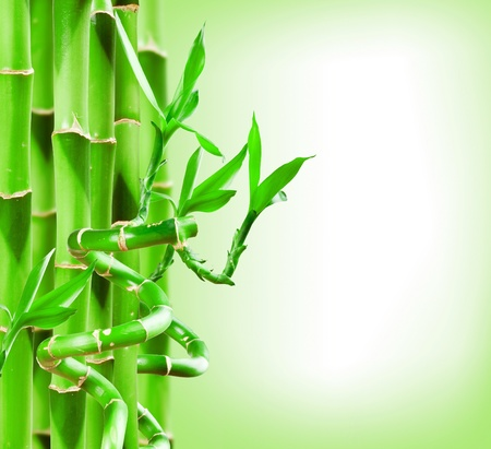 Beautiful Green Bamboo Border for you design photo