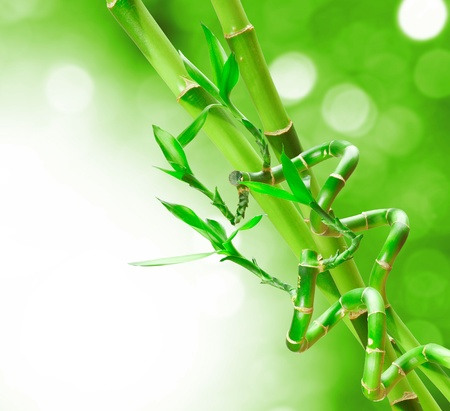 lucky plant: Beautiful Green Bamboo Border for you design Stock Photo