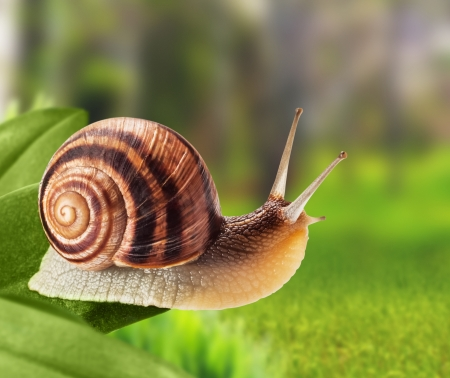 Garden snail climbing on a leaf in the park Stok Fotoğraf