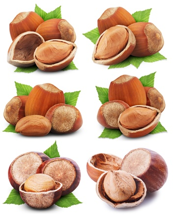 collection of hazelnuts with leaves on a white background photo