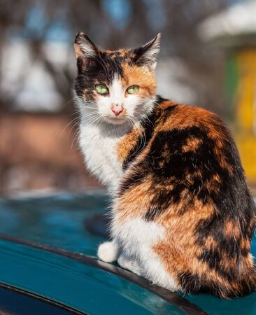 perceive: three-colored cat sitting on the street Stock Photo