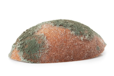 mouldy: Mouldy bread, isolated on a white background