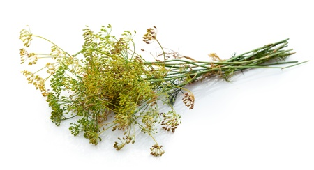 fennel seeds: Dill flower isolated on white  Stock Photo
