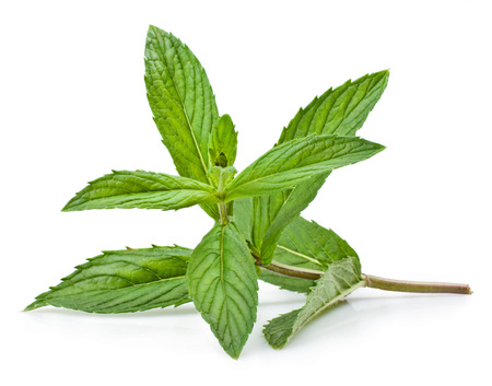 Fresh mint isolated on a white background  Banco de Imagens