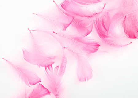 feather boa: delicate pink feathers on a white background
