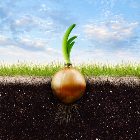 An Onion Bulb and Grass in Blue sky  photo