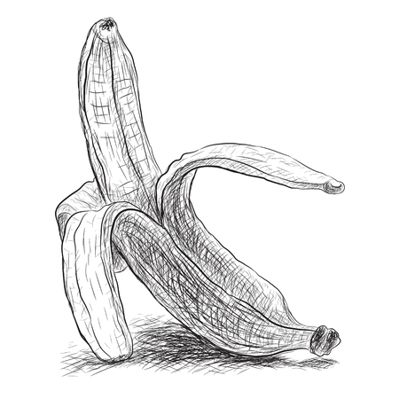 peeled banana: sketch peeled banana, vector illustration