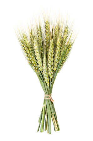 spikelets: Green spikelets, isolated on white  Stock Photo