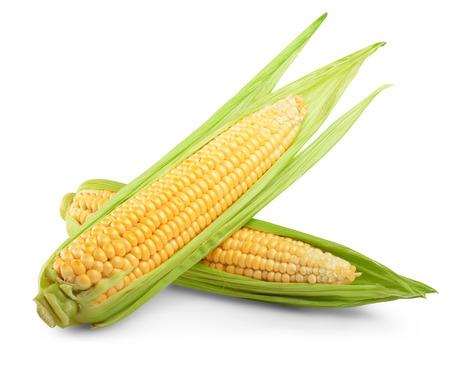 흰색 배경에 격리 된 옥수수. 클리핑 패스 스톡 콘텐츠
