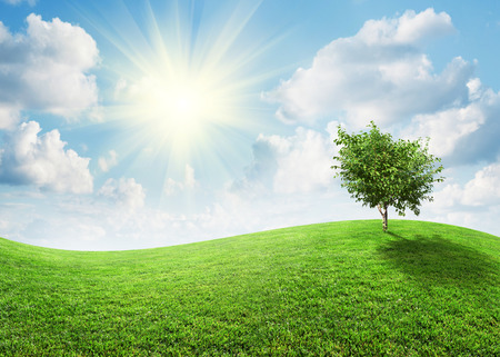 Summer landscape on a bright sunny day photo